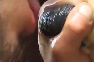 horse-porn
