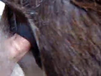 donkey anal zoo sex