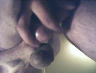 gay animal porn